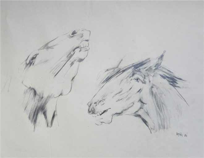 sketch of 2 heads of horses