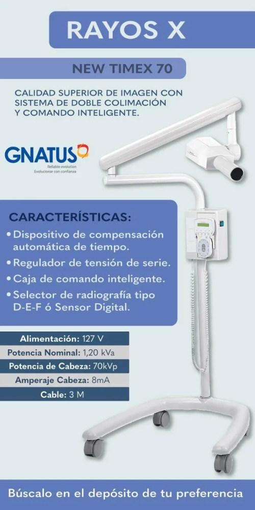 gnatus rayos x