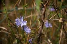 Fleurs Montagnes07