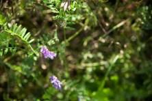 Fleurs Montagnes24