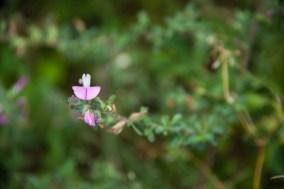 Fleurs Montagnes34