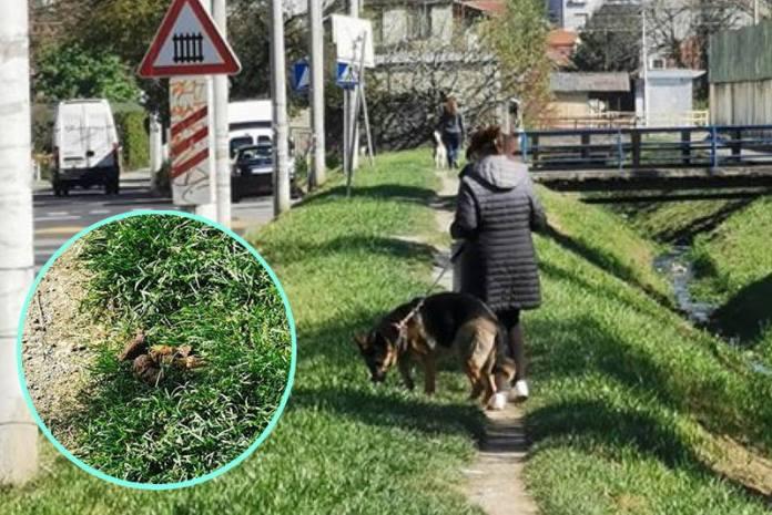 """Prozvala je u FB grupi: """"Gospođa koja šeta njemačku ovčarku ne skuplja drek, a psica ostavlja brdo"""""""