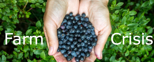 """It's Gone, The Market Has Evaporated:"" Maine's Blueberry Industry In Crisis After Trade War Escalation"