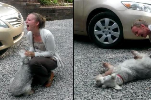 VÍDEO: cachorro desmaia de emoção ao reencontrar dona  Youtube/Reprodução