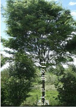 图像将以赛亚以王朝比喻为树