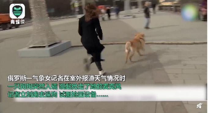 記者播報時突然被狗狗搶走話筒,現場上演追狗大戰