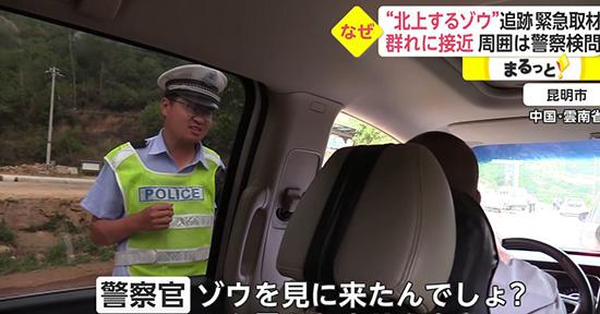 """""""進擊的巨象!""""雲南北遷野象群紅到了日本..."""