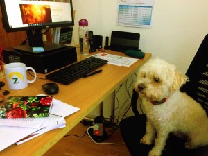 Dogs at work Zetetick dogs Dogs – why are they so pawesome? bobby 003 300x225