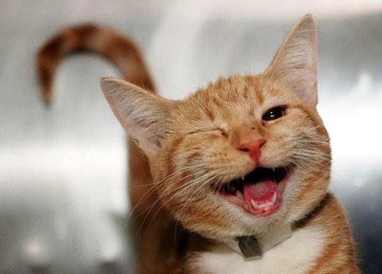 Как кошки выражают эмоции и какие именно (фото)
