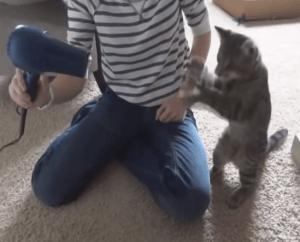 動物の激カワ動画