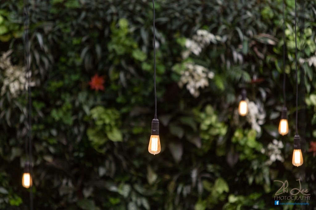 A close up shot of these hanging retro bulbs against our green wall.