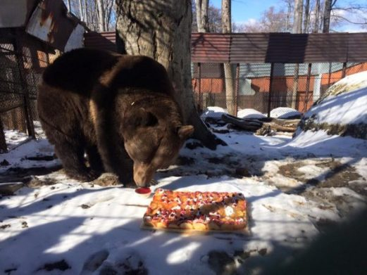 ursul baloo1