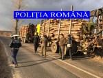 Depistați în timp ce transportau material lemnos fără documente legale