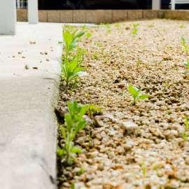 庭の雑草対策。土のスペースをコンクリートにすることで解決。