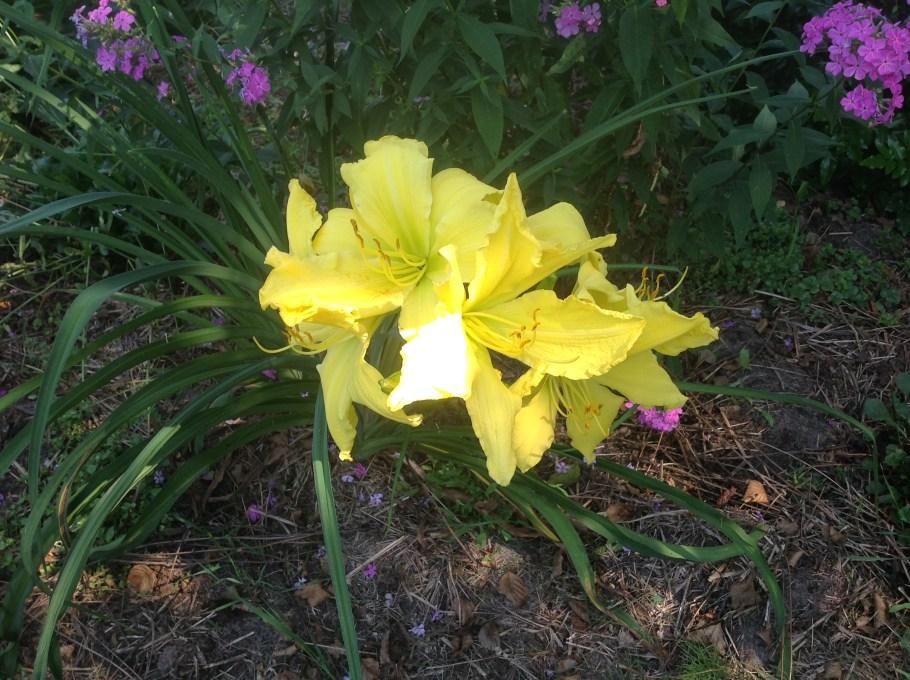img_0926 Pierwsze kwiaty wiosny