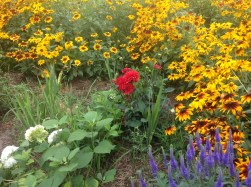 img_0930 Ogród wlesie - Sumin