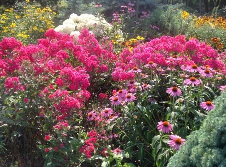 img_0939 Ogród wlesie - Sumin
