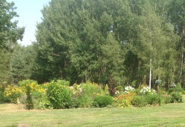 img_0950 Ogród wlesie - Sumin
