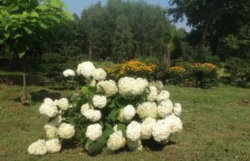 img_0953 Ogród w lesie. Sumin