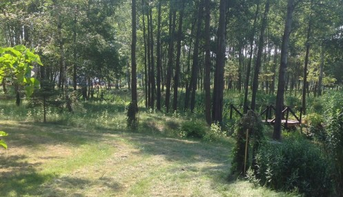 img_1043 Ogród wlesie - Sumin