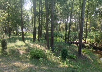 img_1045 Ogród wlesie - Sumin