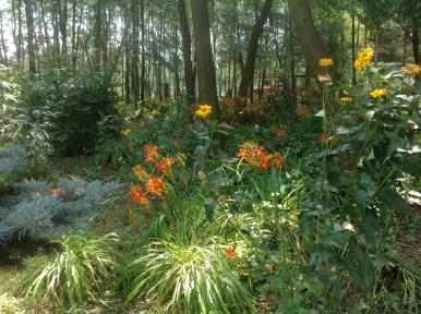 img_1080 Ogród w lesie - Sumin