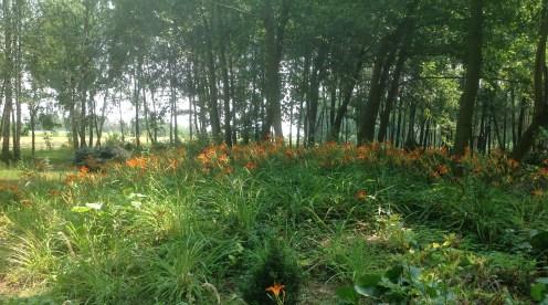 img_1082 Ogród wlesie - Sumin