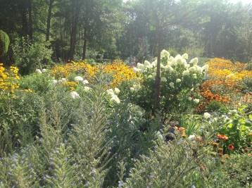 img_1088 Ogród wlesie - Sumin