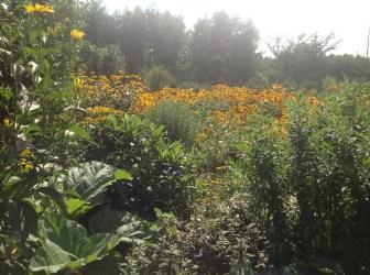 img_1092 Ogród wlesie - Sumin