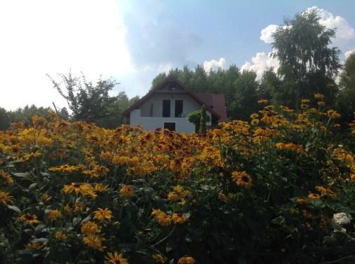 img_1094 Ogród w lesie. Sumin
