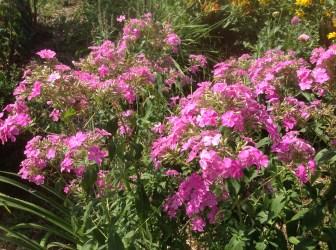img_1096 Pierwsze kwiaty wiosny.