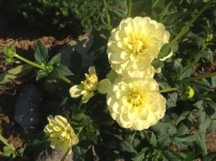 img_1109 Ogród wlesie - Sumin