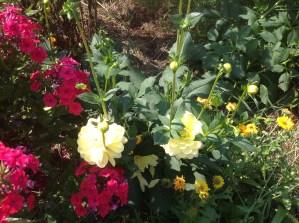 img_1117 Ogród wlesie - Sumin