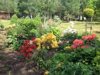 img_2142 Rhododenrony iAzalie - co robić bypięknie kwitły.