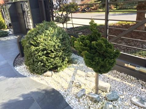 img_6281 Klasyka ogrodu. Classic garden.