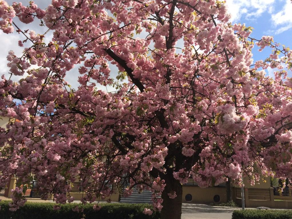 img_6319 Jakie rośliny jako pierwsze budzą się na wiosnę?