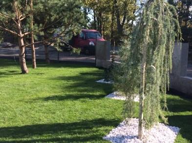 img_7041 Trawa z rolki. Roll grass.