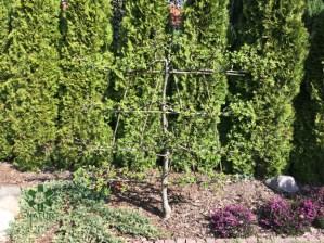 niemcz-grzenia_00006 Klasyka ogrodu. Classic garden.