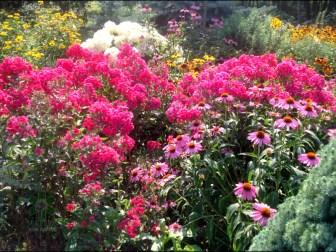 ogrc3b3d-naturalny-w-sumienie_00013 Ogród w lesie. Sumin