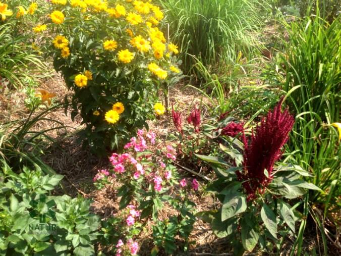 ogrc3b3d-naturalny-w-sumienie_00017 Ogród w lesie. Sumin