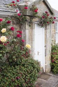 Colorful deep red roses trailing around a closed white painted cottage door in a stone facade with yellow roses in a bed in the foreground