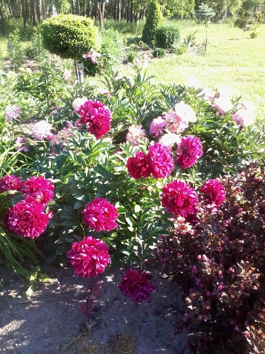 zdjc499cie0009 Pierwsze kwiaty wiosny