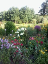 zdjc499cie0039 Ogród wlesie - Sumin