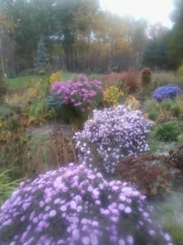 zdjc499cie0065 Ogród wlesie - Sumin