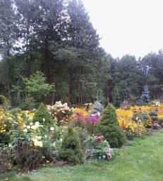 zdjc499cie0162 Ogród w lesie - Sumin
