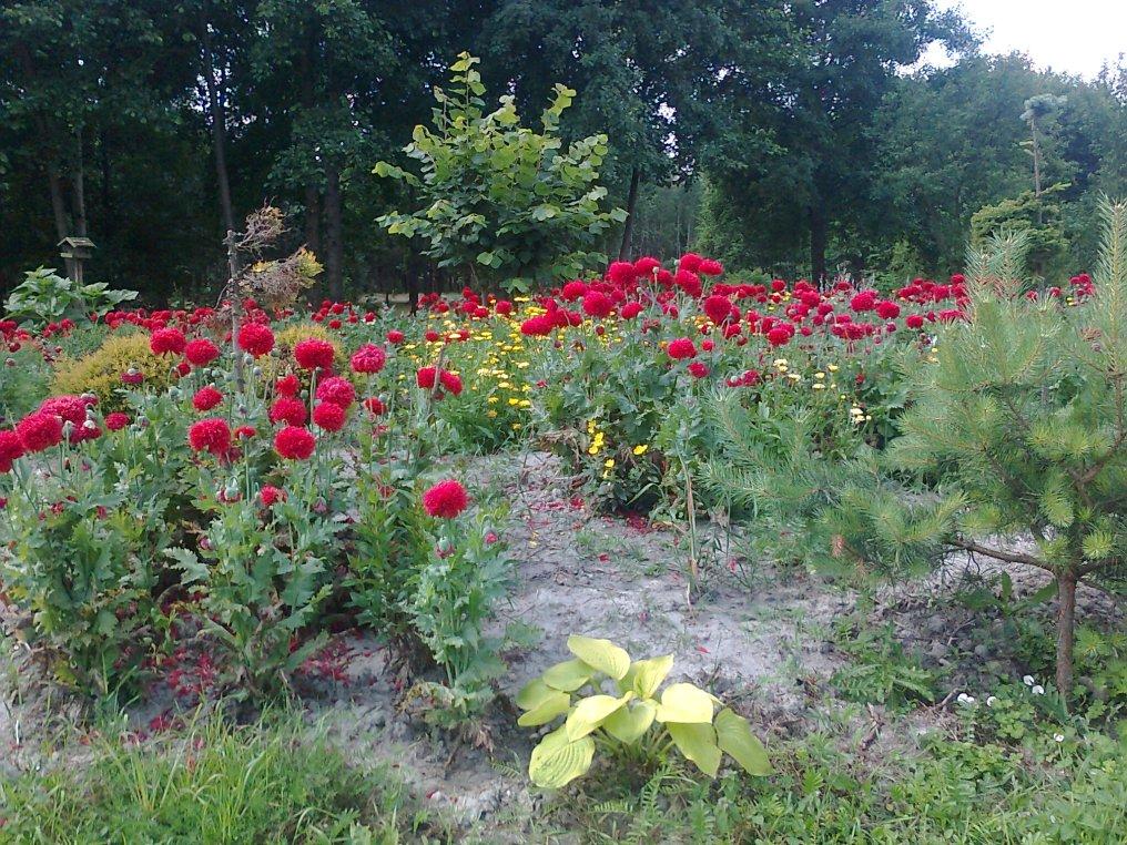 zdjc499cie0205 Ogród w lesie. Sumin