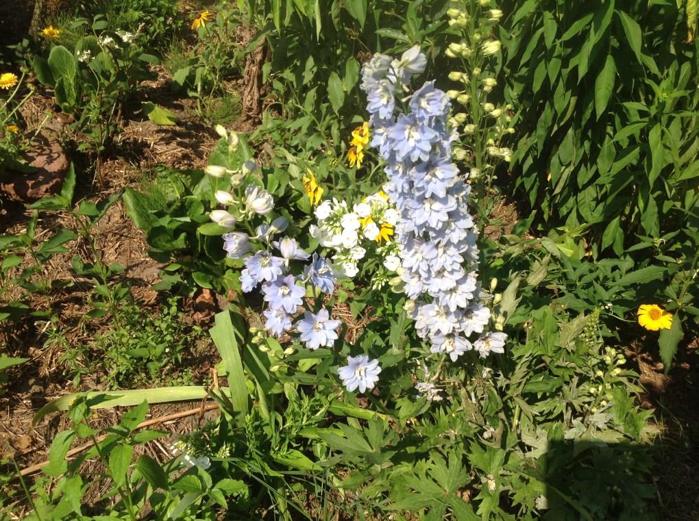 img_1114 Pierwsze kwiaty wiosny