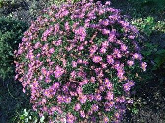 img_20171001_152955 Kwiaty jesieni