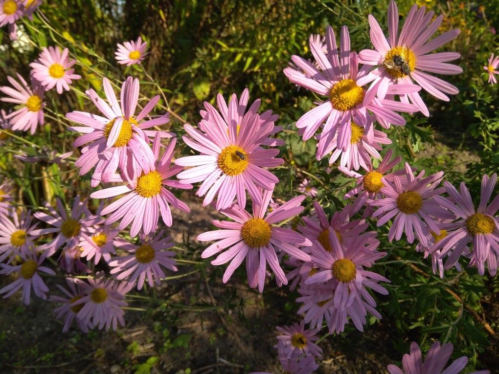 img_20171001_153159 Te kwiaty kwitną jesienią