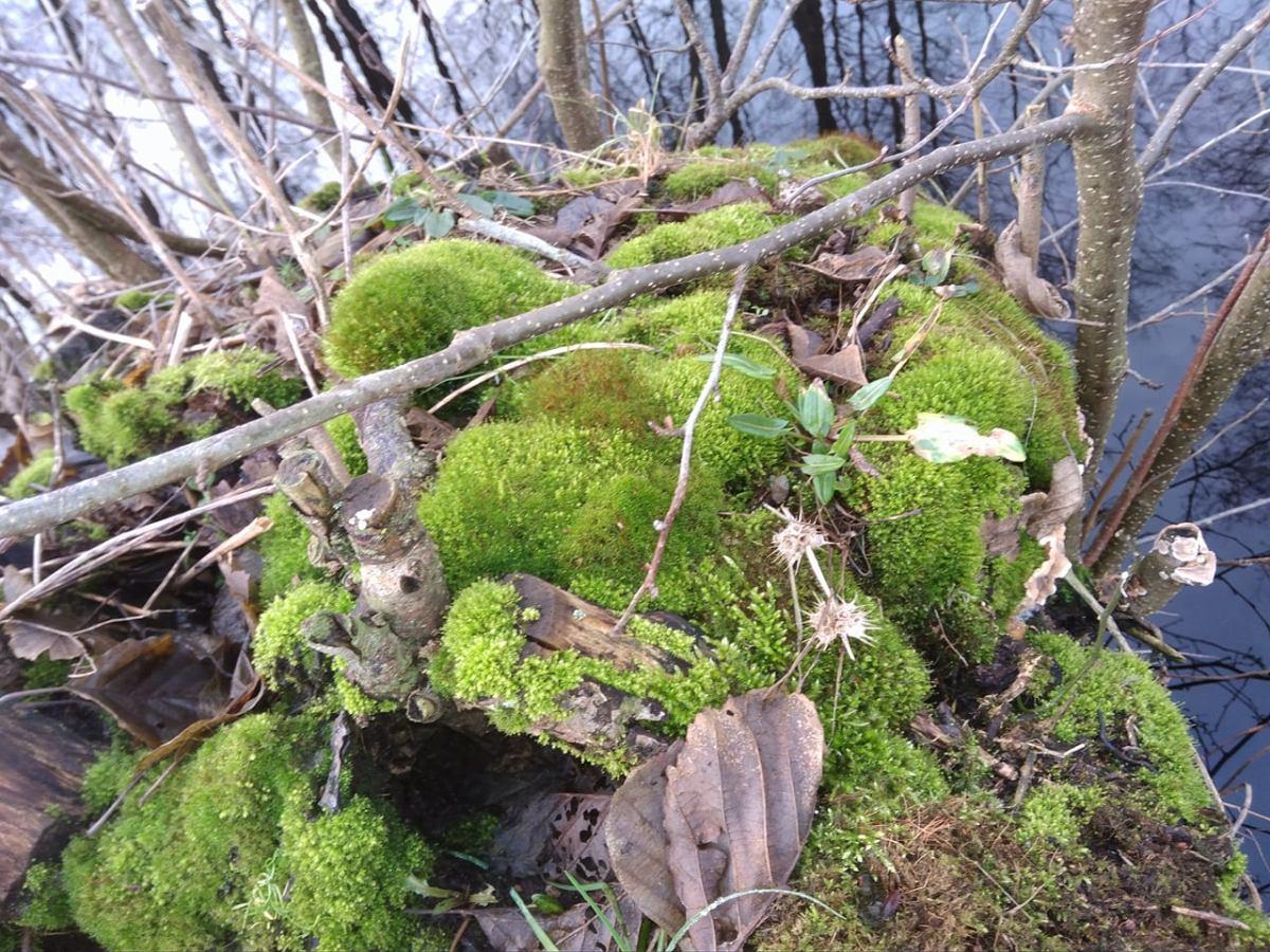 Co to jest mikoryza?